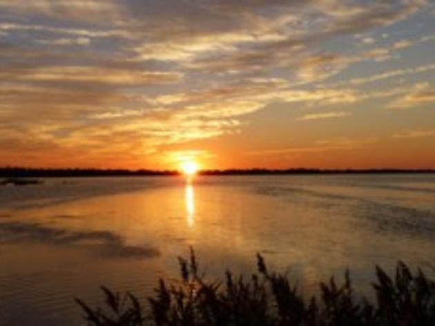 Coastal Review Online: Lake Mattamuskeet Plan Ruffles Feathers