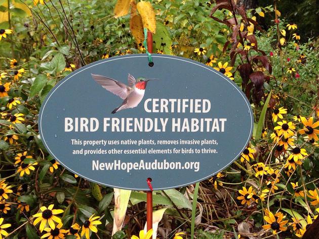 New Hope Audubon's Guide to a Bird-Friendly Backyard