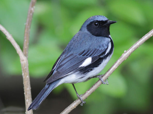 Survey finds diverse species at bird-friendly forestry site