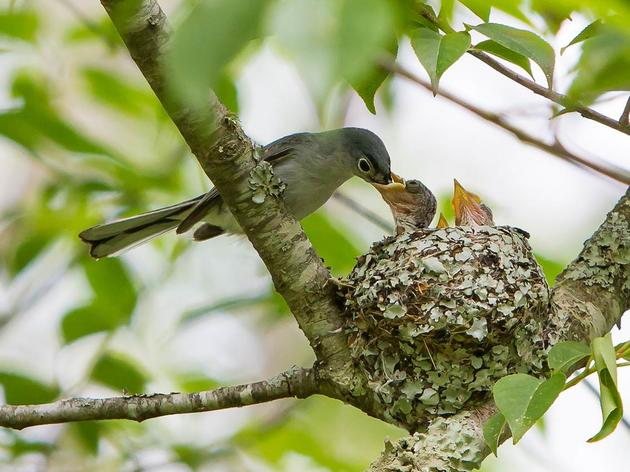 Help Celebrate Success of Nesting Birds