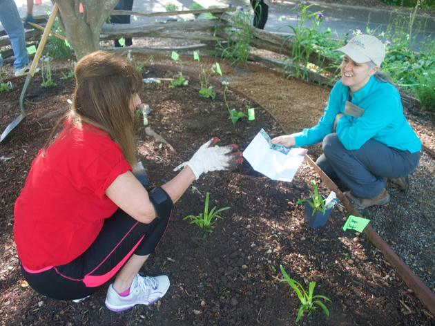 Community Partners Build a Bird-Friendly Exhibit Garden in the Heart of Charlotte