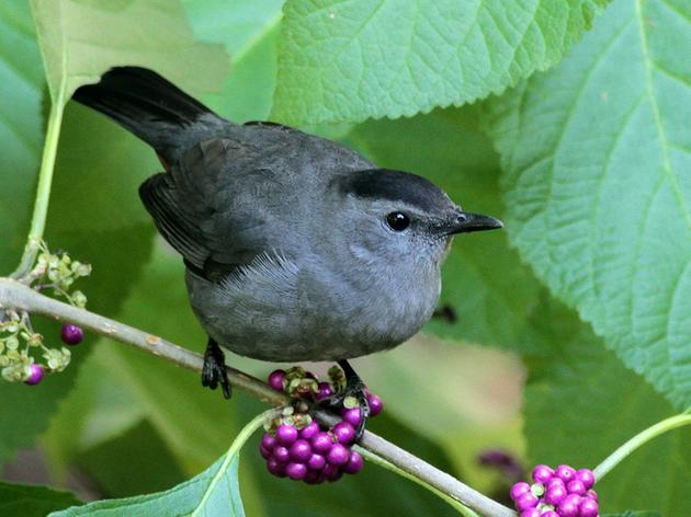 Walter Magazine: Spotlight: Grow it for the birds