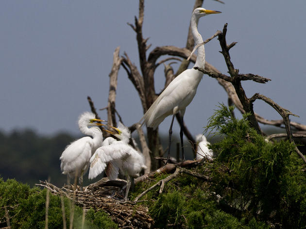 A Partnership to Protect over 50,000 birds Along the Cape Fear River