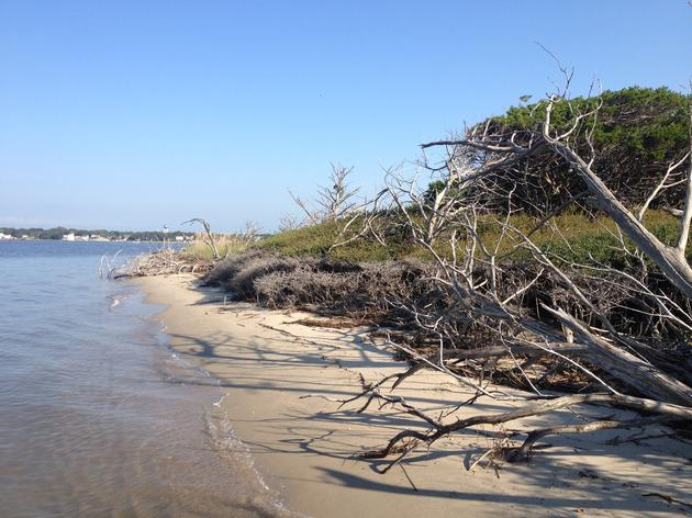 Assessing How Shoreline Change Impacts Nesting Waterbirds