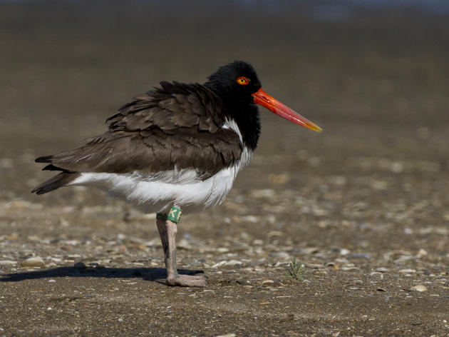 Share Your Holiday with Shorebirds