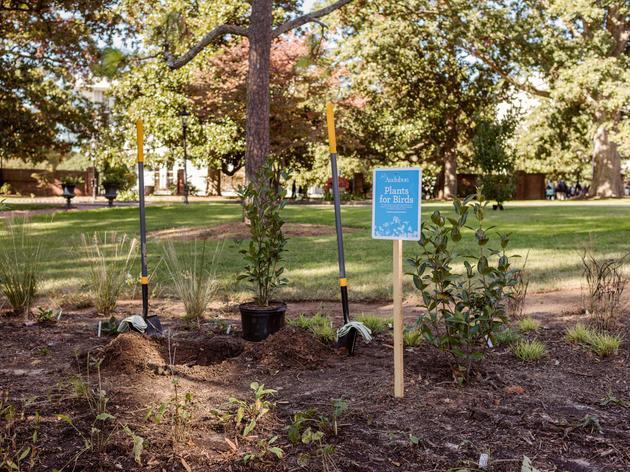 Audubon North Carolina & First Lady Kristin Cooper Build a Bird-Friendly Garden at the Executive Mansion