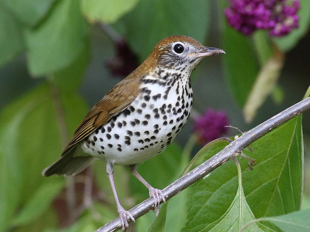 Oct. 17 -- Survival By Degrees: 389 Bird Species on the Brink