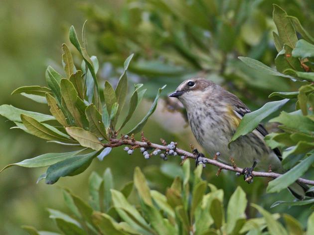 Help North Carolina's Executive Mansion Get Bird and Pollinator-Friendlier