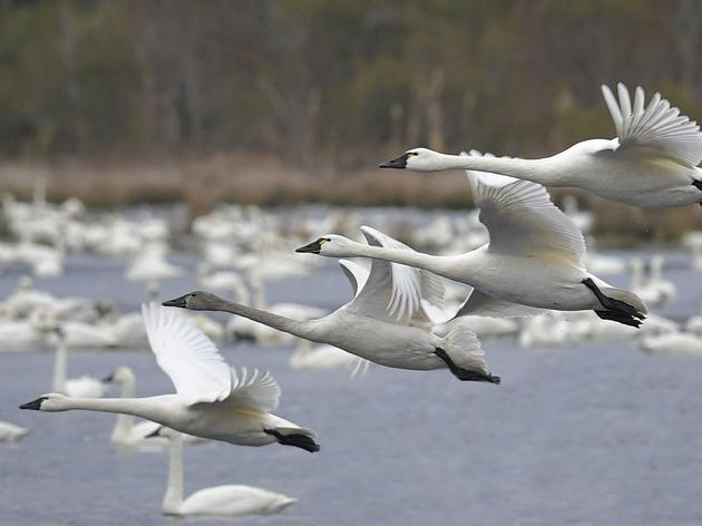 Audubon Receives State, Federal Grants to Enhance Resiliency on Currituck Sound