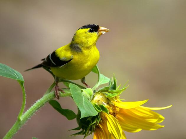 Audubon Statement: NC Clean Energy Bill is a Big Bipartisan Win for Birds and People