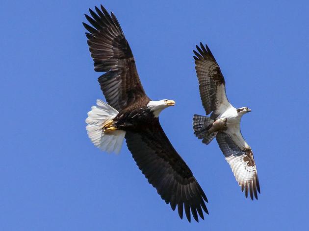 Audubon's 119th Annual Christmas Bird Count Begins Dec. 14