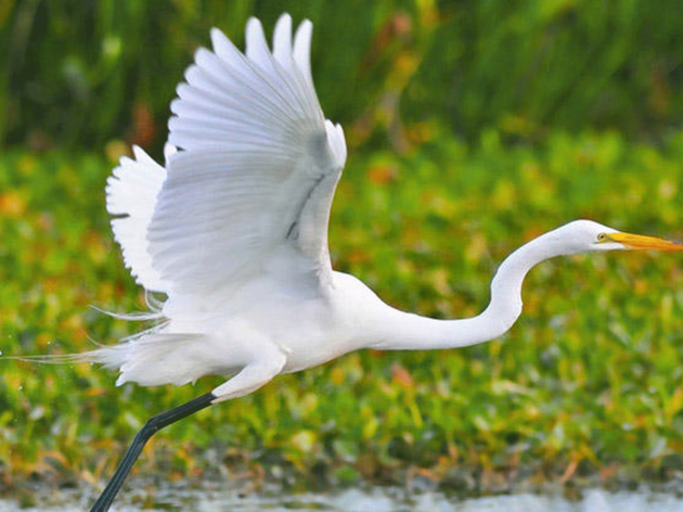 Ways to give to Audubon North Carolina