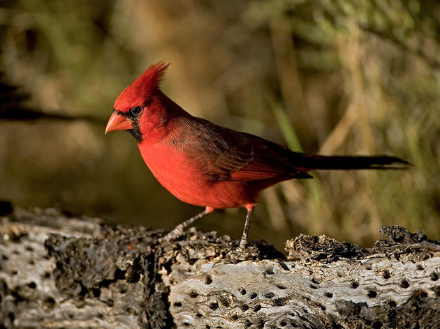 How Well Do We Really Know Cardinals?