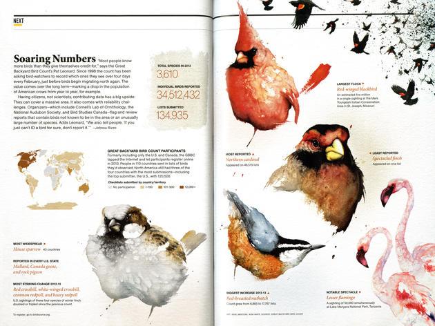 National Audubon Holds 17th Annual Great Backyard Bird Count