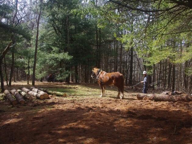 Horses and Flying Logs: Using Old and New Forestry Methods to Improve Bird Habitat