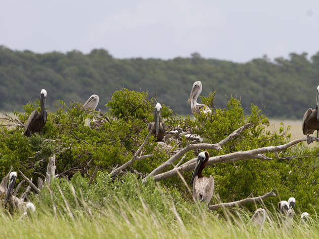 Looking for an Escape? Try These 360 Videos of Bird Nesting Colonies