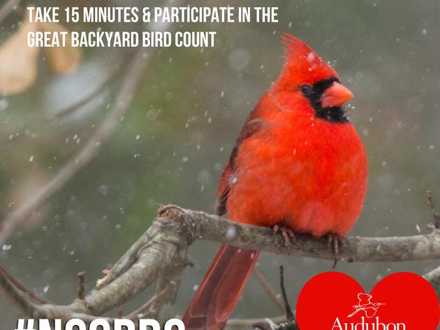 Show Birds Some Love on Valentine's Weekend