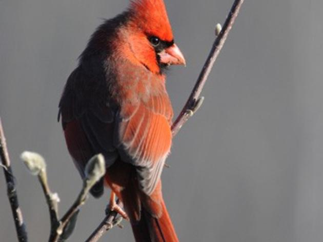 117th Annual Audubon Christmas Bird Count