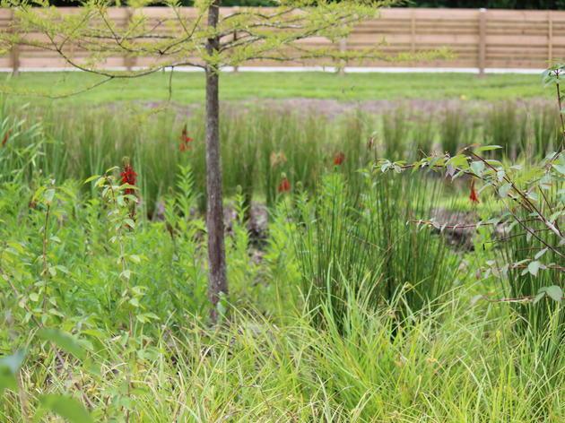 Why Bird-Friendly Landscape Architecture Matters