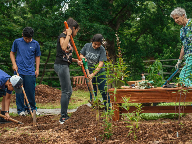 A Native Plants Garden That Brings Birds, Pollinators, and Parishioners Together