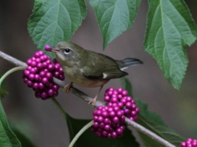 Help Winter Birds with a Deadhead
