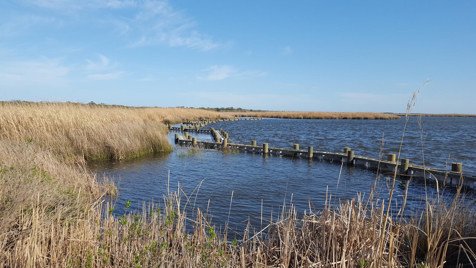 Pine Island's living shoreline.
