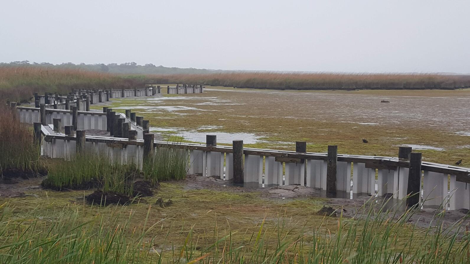 Living shoreline at low tide.