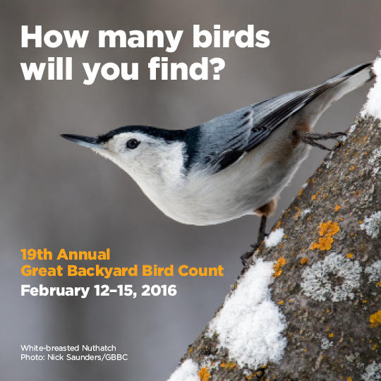 North Carolina is for the Birds During the Great Backyard ...