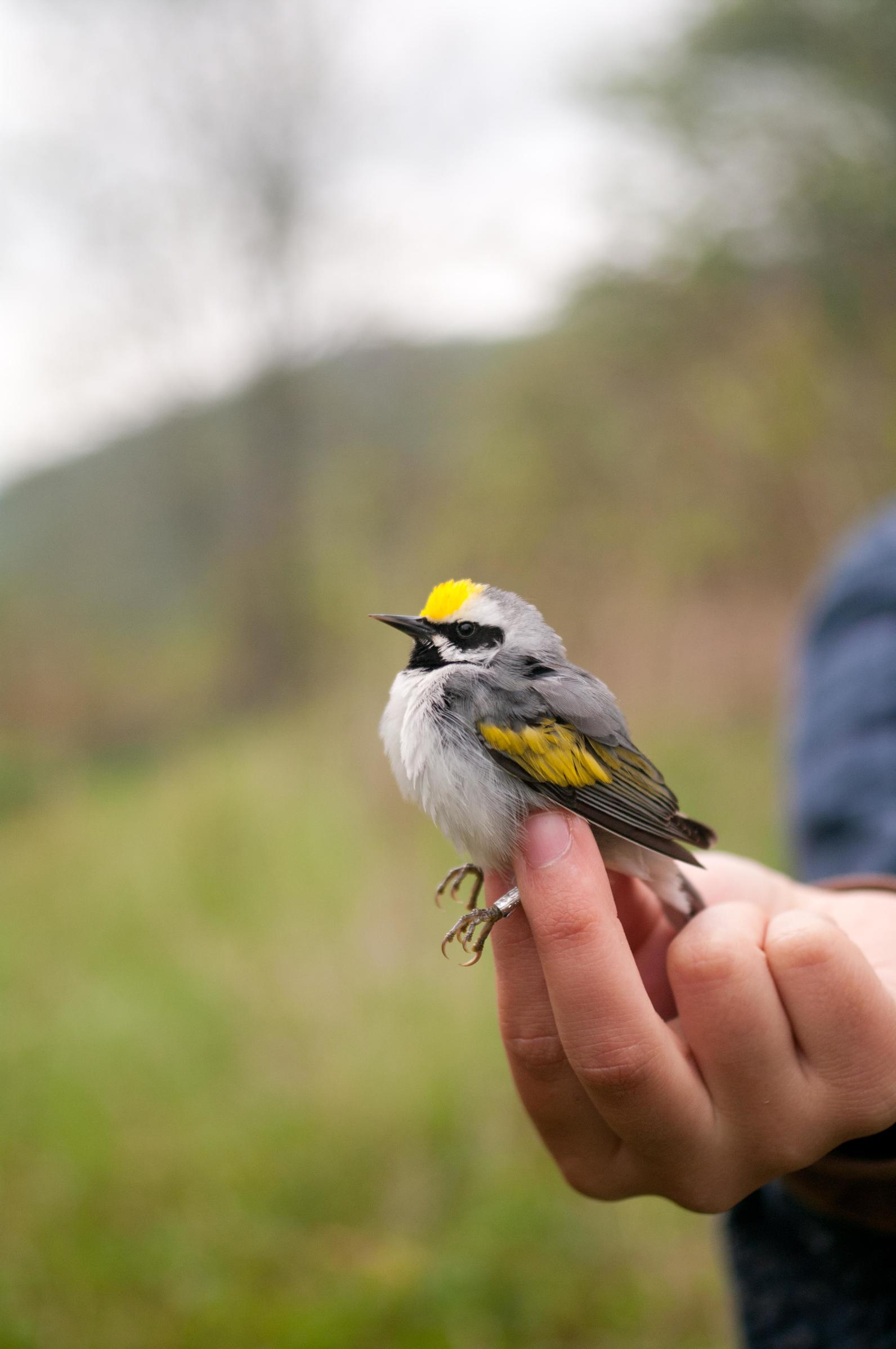 stories from the forest audubon partners audubon north carolina