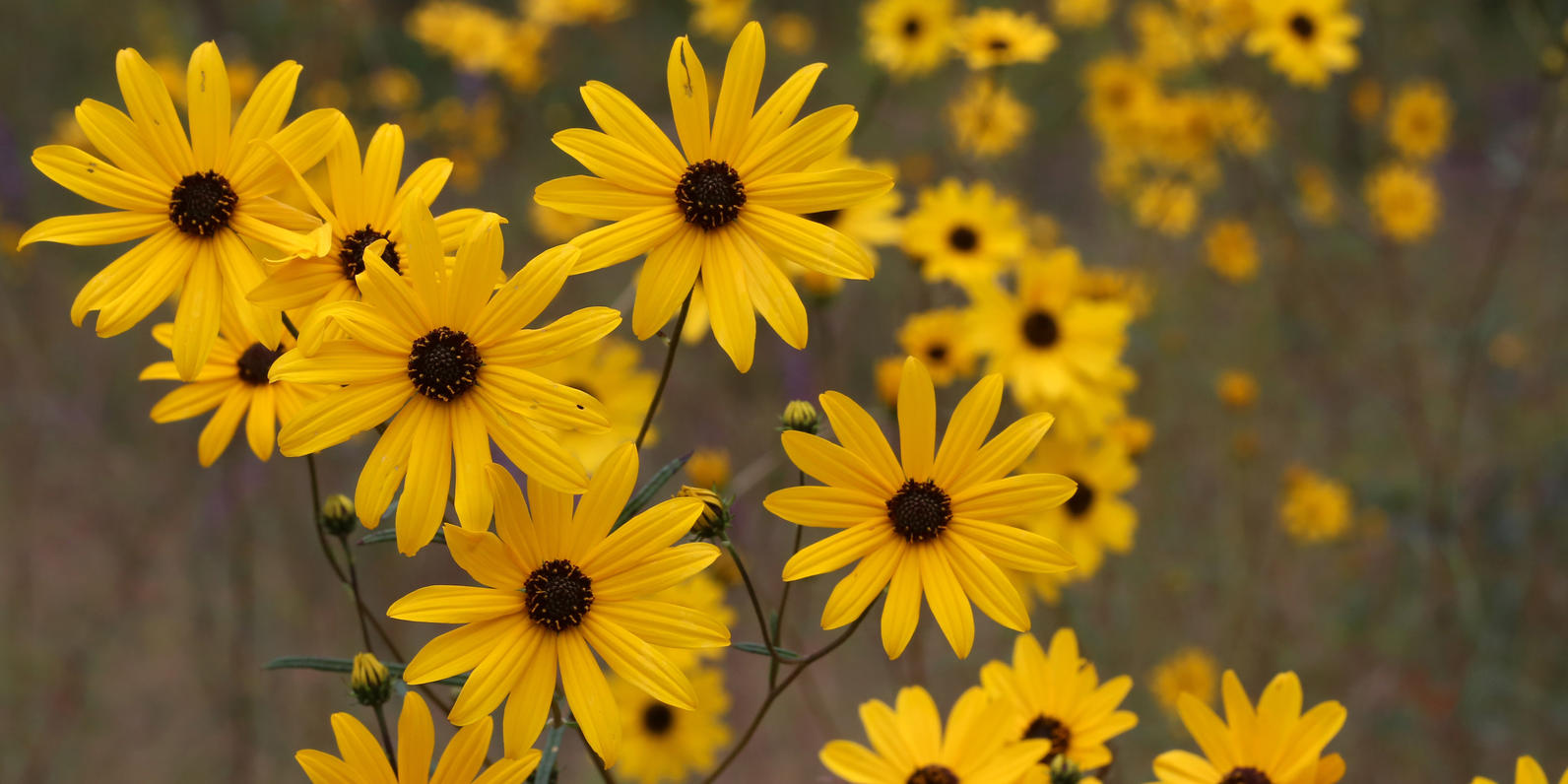 Were Nuts About These Bird Friendly Native Plants Audubon North