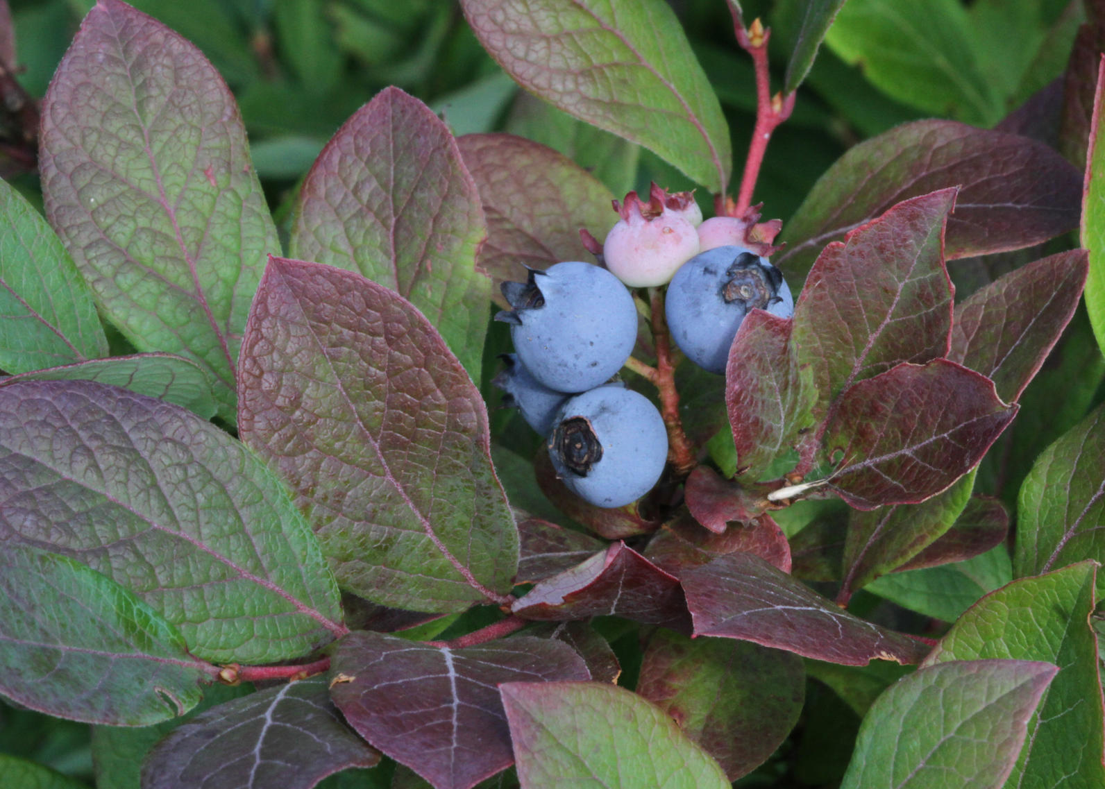 These Bird Friendly Native Plants Are Berry Special