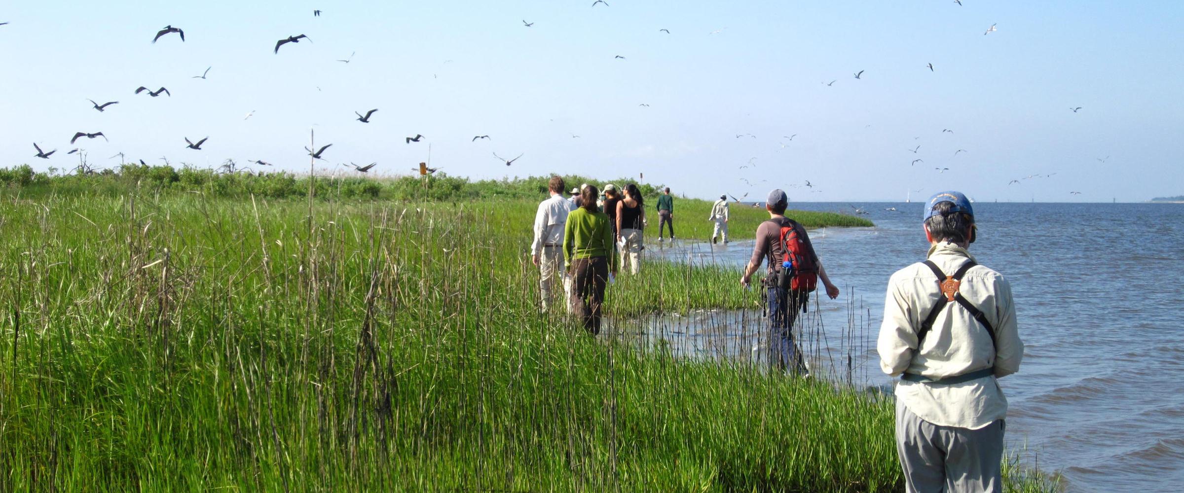 2011 Waterbird Census on North Pelican Island -