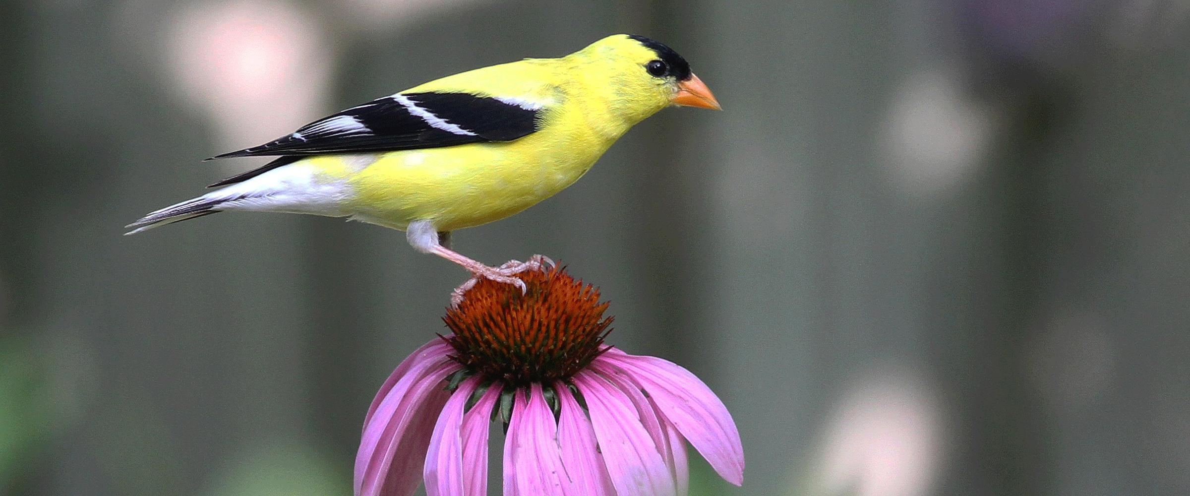 bird friendly communities audubon north carolina