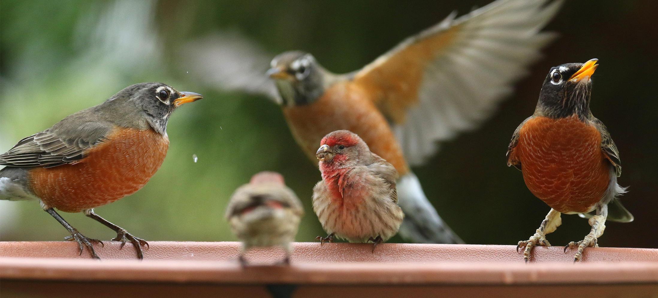 You're Invited: North Carolina's 21st Great Backyard Bird ...