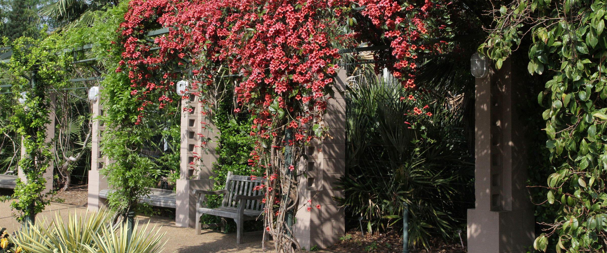 Bignonia capreolata Garden Setting by Will Stuart