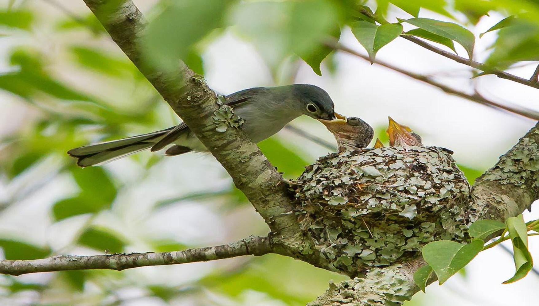 help celebrate success of nesting birds audubon north carolina