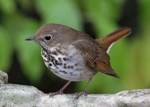 Creating a Bird-Friendly Backyard | Audubon North Carolina