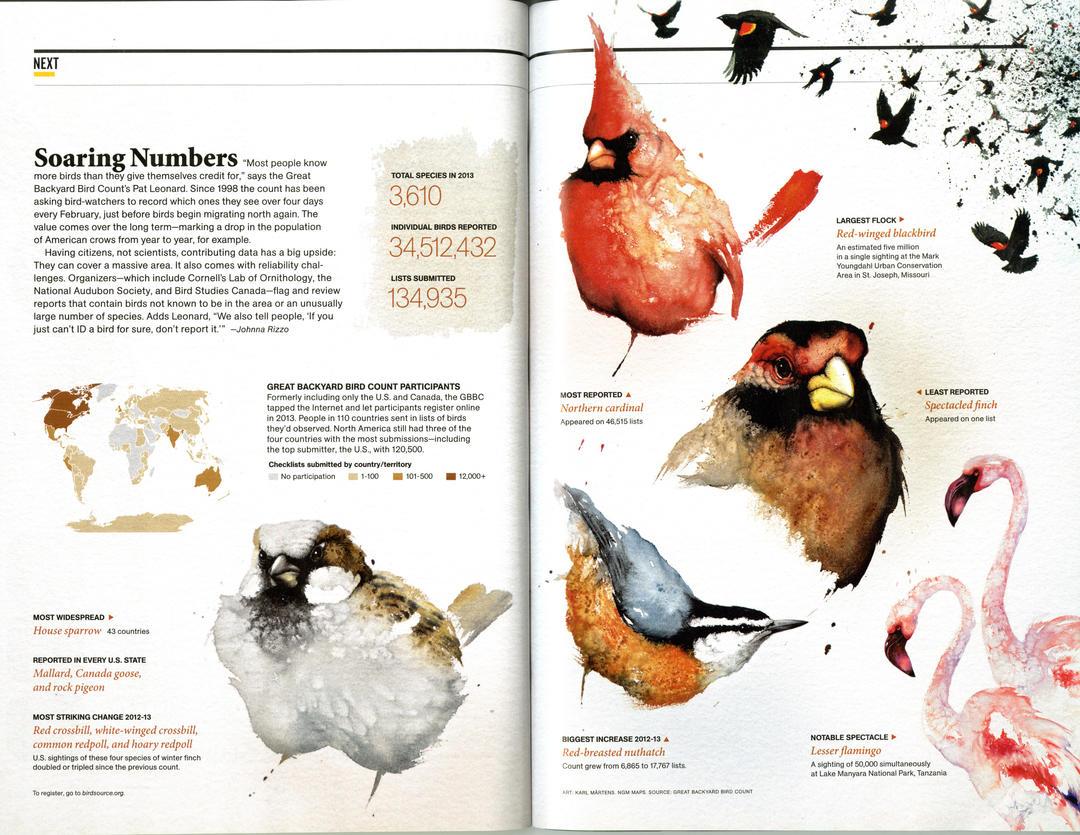 National Audubon Holds 17th Annual Great Backyard Bird ...